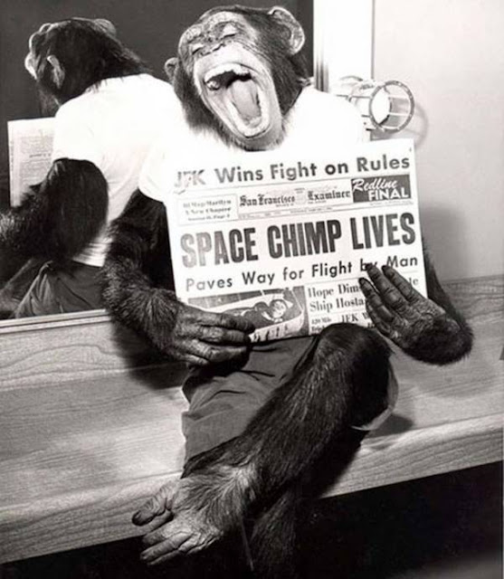 A chimp who survived his trip to space