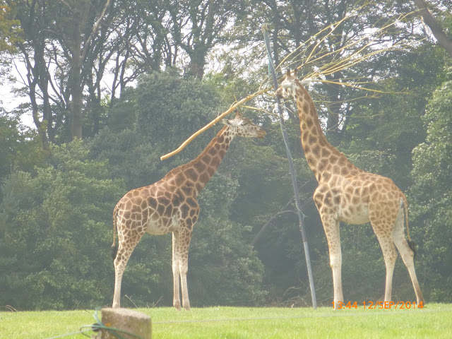 Fota Wildlife Park Cork