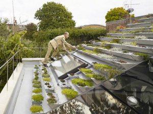 Garden In Rooftop 1