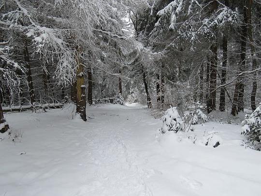 Szlak zejściowy na Przełęcz Gruszowiec.