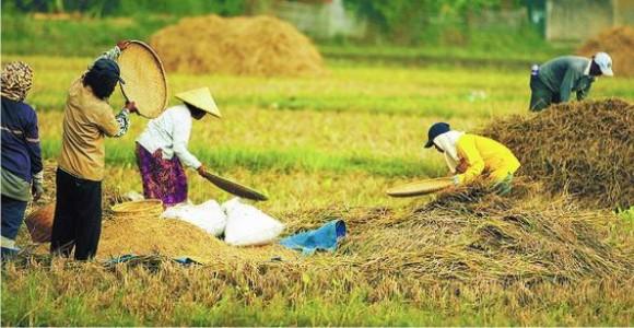 Kondisi Pertanian Di Indonesia Dilema Sistem Pertanian Di Indonesia