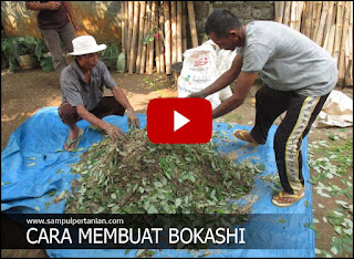 Video : 2 Menit bisa ahli buat Bokashi