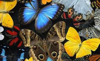 Dibujo de muchos tipos de mariposas