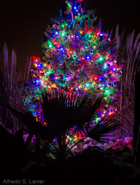 Life at Rancho Santa Clara: The most beautiful Christmas tree in ...