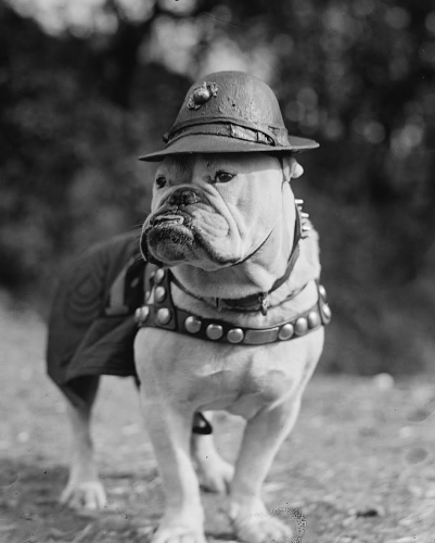 Famous Dogs in History: Jiggs: First USMC Mascot