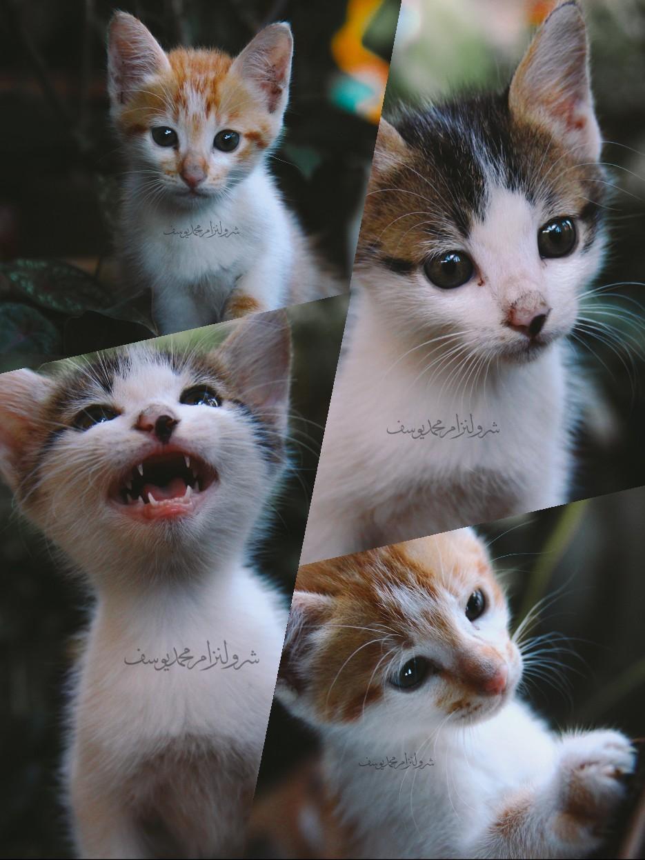 Anak Kucing Yang Comel Dan Riang - 9