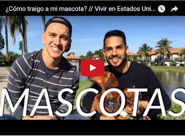 Cómo llevarte tu mascota cuando emigres de Venezuela