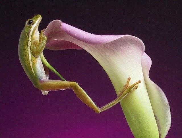 Imagen rana en una flor