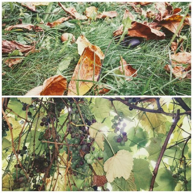 Herbstblätter und Sonnenstrahlen durch das Laubdach