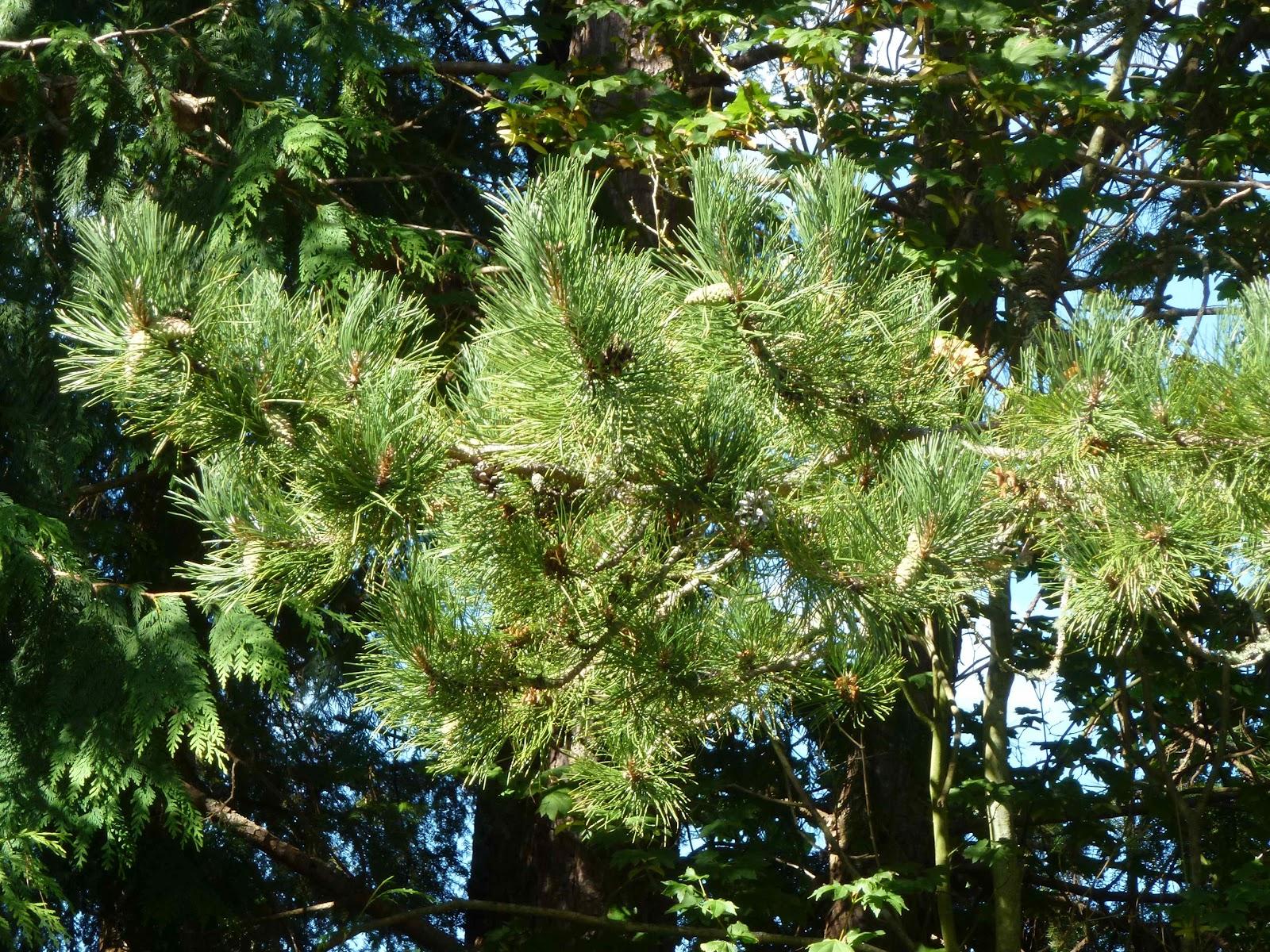 Mrs Deeds Ap Biology Blog Natalie Yancey Photos 21 30