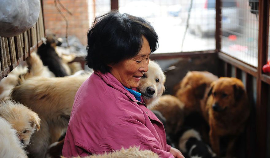 She tries to give them treats every weekend - Chinese Woman Travels 1,500 Miles And Pays $1,100 To Save 100 Dogs From Chinese Dog-Eating Festival