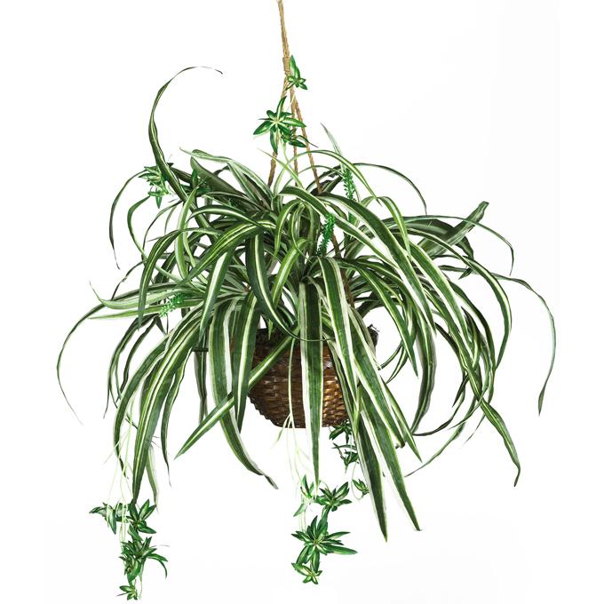 http://www.archieandtherug.com/ 10 best hanging houseplants