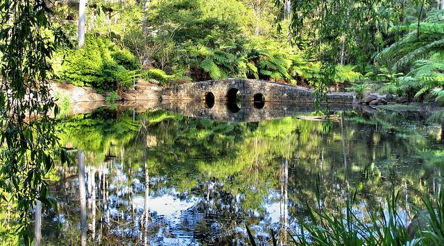 黃金海岸-景點-推薦-坦柏林山-天寶山-Gold-Coast-Attraction-Tamborine-Mountain-Tourist-destination