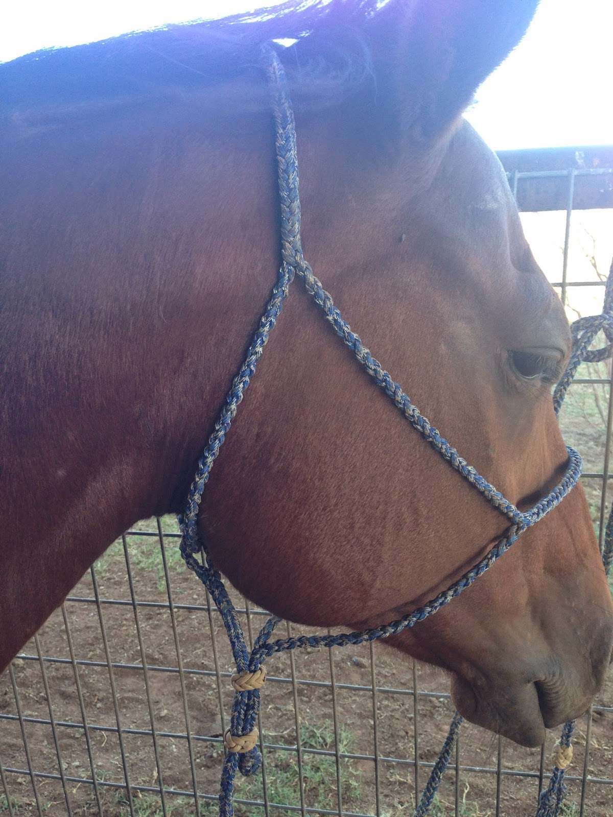 The Paracord Cowboy Halter For Horse Part 2