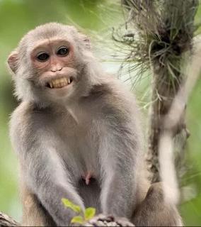 Arti Mimpi Dikejar Oleh Monyet Lengkap Dengan Maknanya.