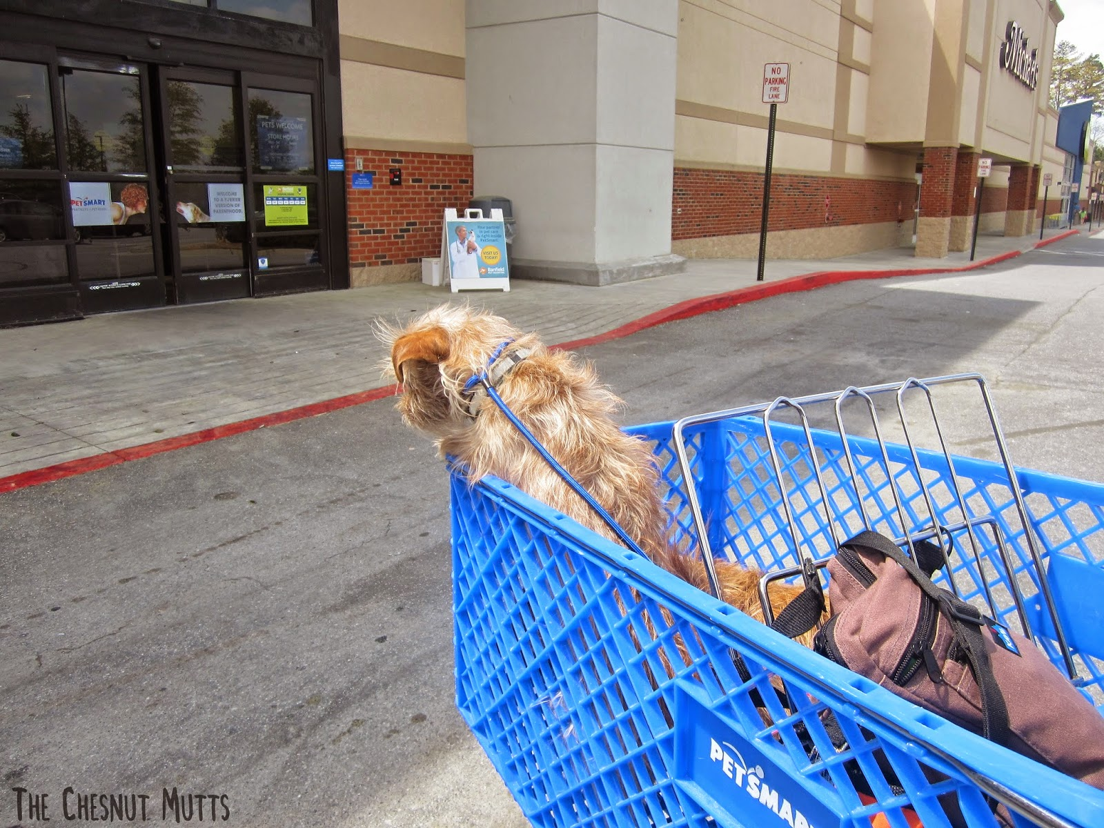 Bailey in a Petsmart cart