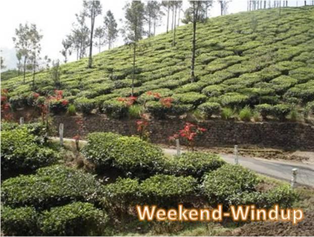 Munnar Tea Estate