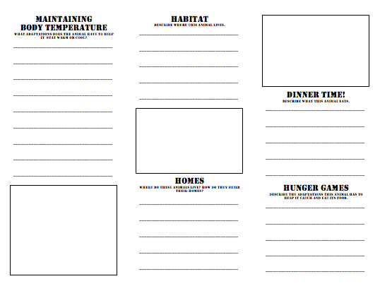 Printable Booklet Template. Free Blank Book Cover Template Book