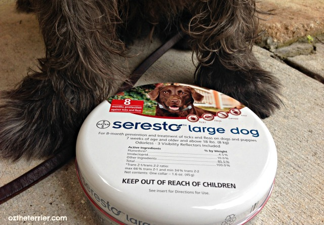 Oz wears Seresto flea and tick prevention collar