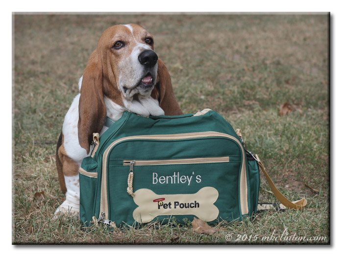 Bentley Basset with overnight bag from Personal Creationss