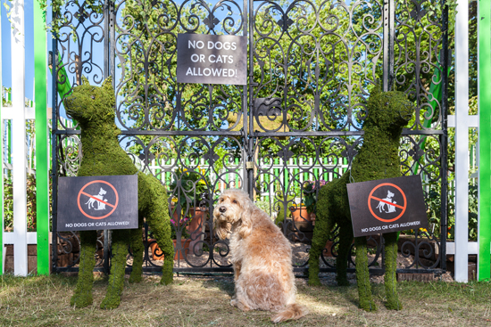MORE TH>N has commission RHS gold medal winner, Ian Drummond to create a world's most dangerous garden for cats and dogs.