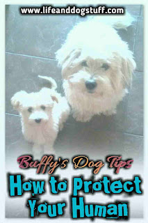 How To Protect Your Human - Buffy's Dog Tips