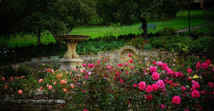 University Rose Garden. Tasmania. Australia