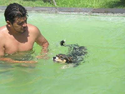 hidroterapia canina