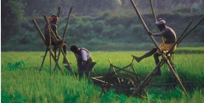 kuttanad the rice bowl of kerala