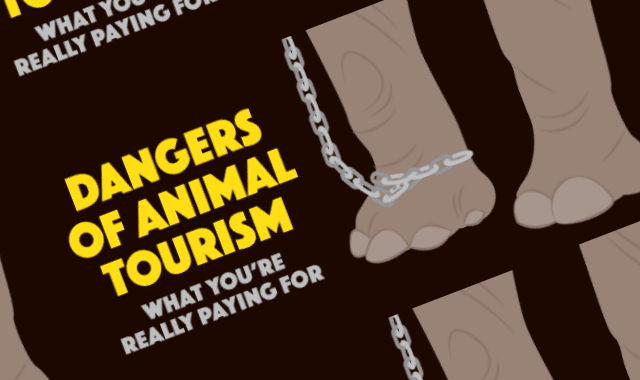 The Dangers of Animal Tourism