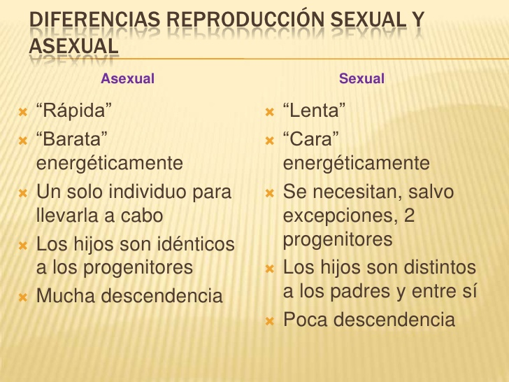 Tipos de reproduccion asexual cuadro comparativo