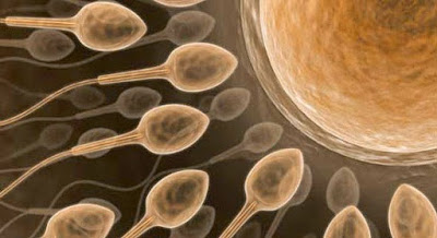 成功懷孕除了媽媽努力爸爸的精子也很重要