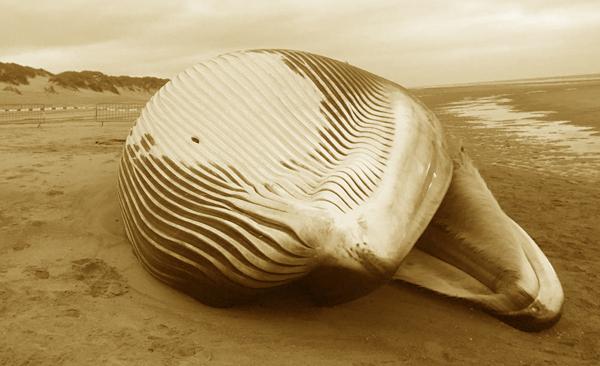Baleine en Méditerranée