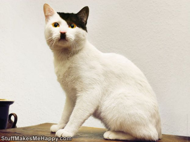 Joke of Nature: Cats with The Most Ridiculous And Unusual Colors