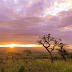 Searching for the Big Five in South-Africa: a guide for safari-virgins!
