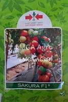 benih tomat sakura f1,benih tomat,tomat,budidaya tomat,lmga agro