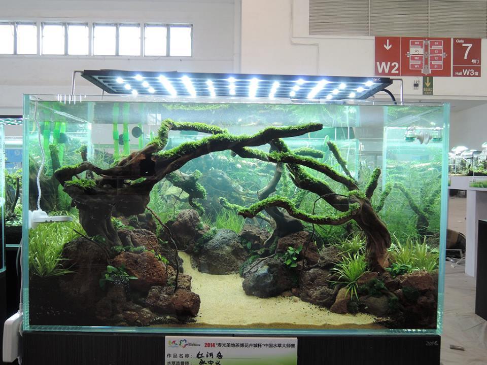 bố cục hồ thủy sinh chơi lũa của tác giả Andy Chen