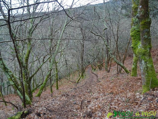 Bosque en Boal