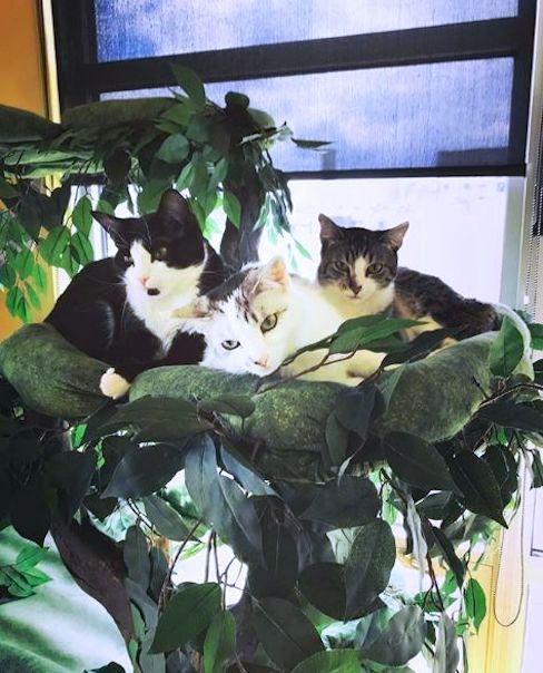 Sturdy Cat Tree