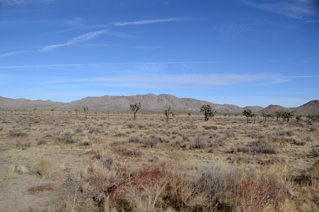 Queen Mountain past a lot of flat full of Joshua Trees