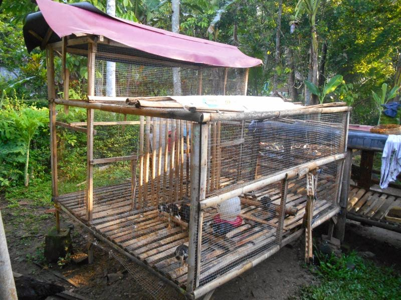 gambar kandang ayam kampung modern