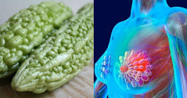 The Plant That Kills Cancer Cells, Stops Diabetes and Boosts Your Immune System