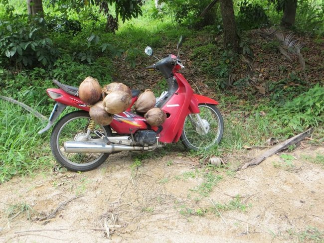 скутер гружённый кокосами