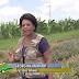 Assista a matéria do Bahia Rural exibida hoje (20/11) gravada na Embrapa de Cruz das Almas