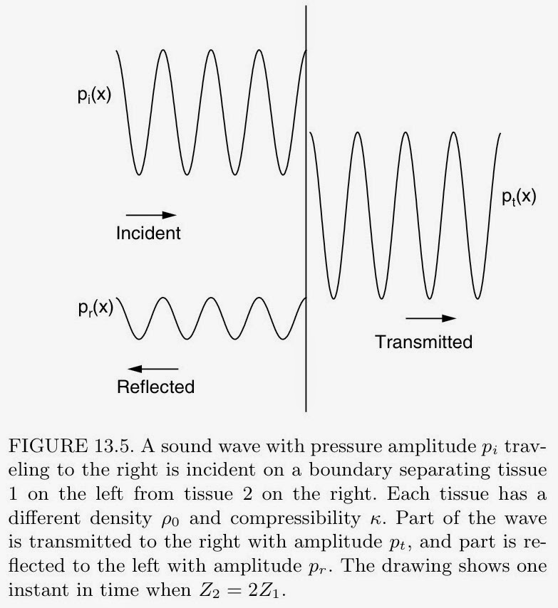 Figure 13.5 from Intermediate Physics for Medicine and Biology.
