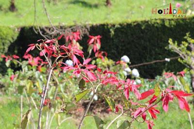 Flora @ chettiar park
