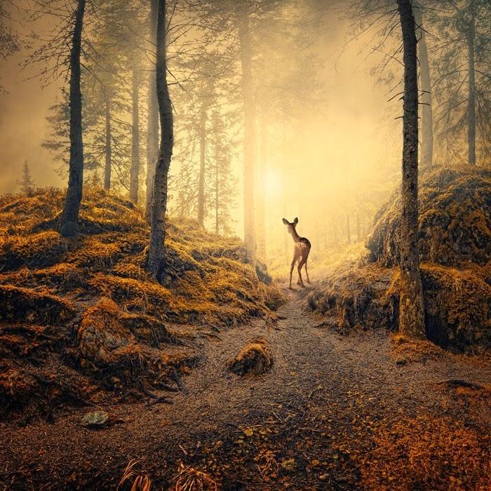 Красота осени и зимы. Caras Ionut