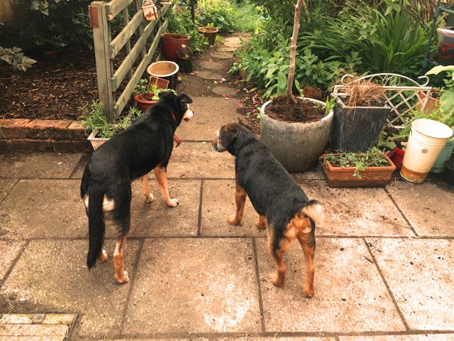 Garden dogs