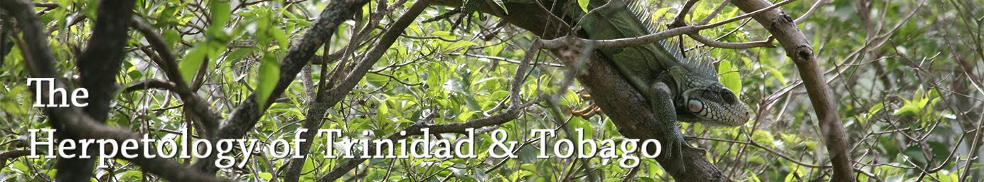 The Herpetology of Trinidad and Tobago
