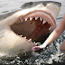 World's 4 Most Shark Attack Beaches